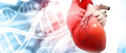 biotec_slide_heart_t